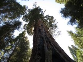 Boole Tree 001