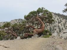 Mt. Baldy 008
