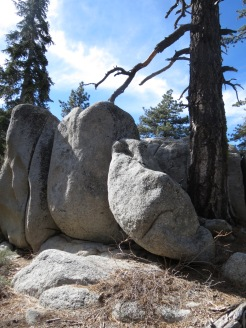Seven Pines Trail 006