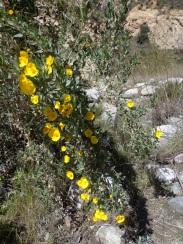 Trail Canyon 008