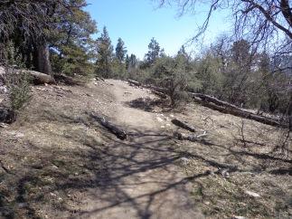 Woodland Trail 002