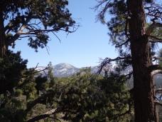 Woodland Trail 005