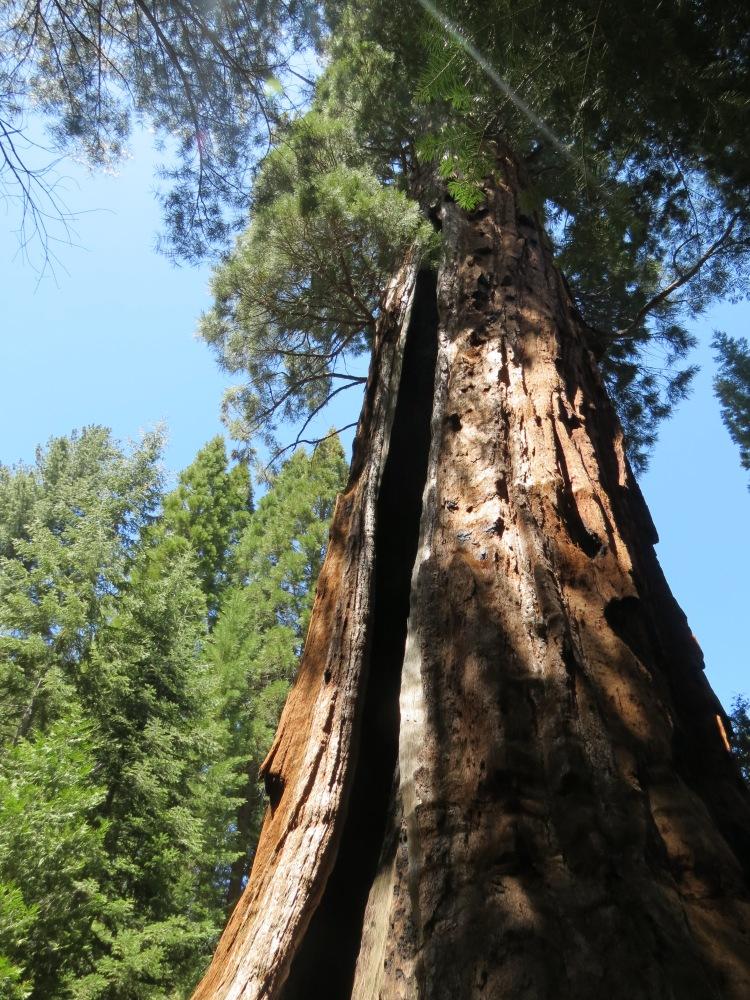 Boole Tree 012