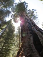 Boole Tree 009
