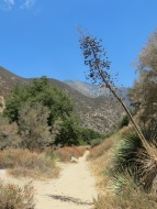 East Fork Trail 004