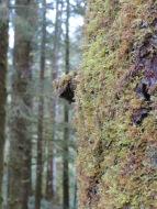 Heceta Head Trail 002
