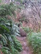 Heceta Head Trail 006
