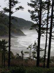 Heceta Head Trail 012