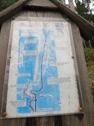 Heceta Head Trail 013