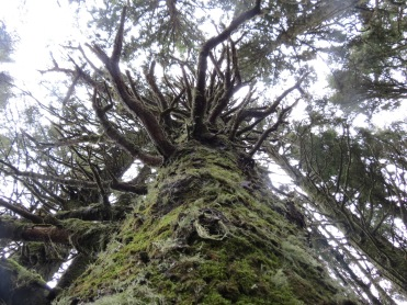 Heceta Head Trail 017