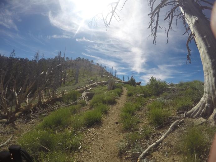 Mt. Hawkins 005