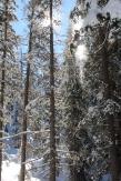 Pear Lake Ski Hut 21