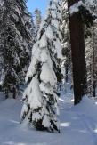 Pear Lake Ski Hut 02